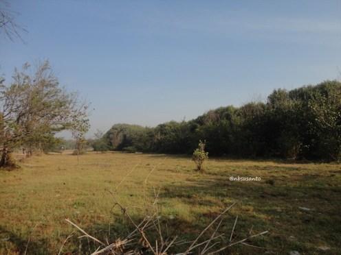 ekowisata mangrove baros kretek bantul (47)