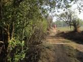 ekowisata mangrove baros kretek bantul (53)