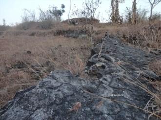 tebing bukit pertambangan batu breksi berbah sleman (46)