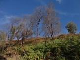 kawah gunung ijen banyuwangi (88)