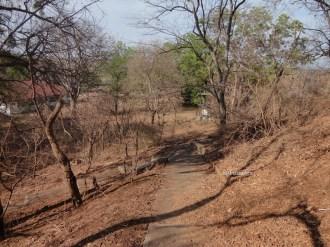 taman nasional baluran banyuwangi, afrika-nya pulau jawa (67)