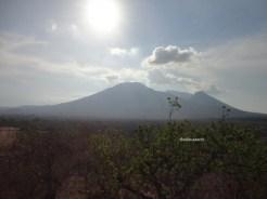 taman nasional baluran banyuwangi, afrika-nya pulau jawa (73)