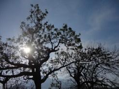 taman nasional baluran banyuwangi, afrika-nya pulau jawa (79)