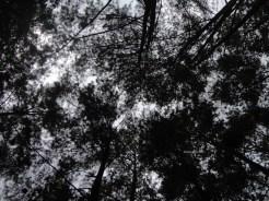 curug nangka taman nasional gunung halimun salak bogor (14)