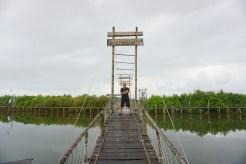 wisata hutan mangrove pantai jembatan api api kulonprogo yogyakarta (17)