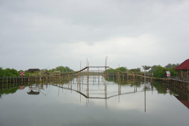 wisata hutan mangrove pantai jembatan api api kulonprogo yogyakarta (18)
