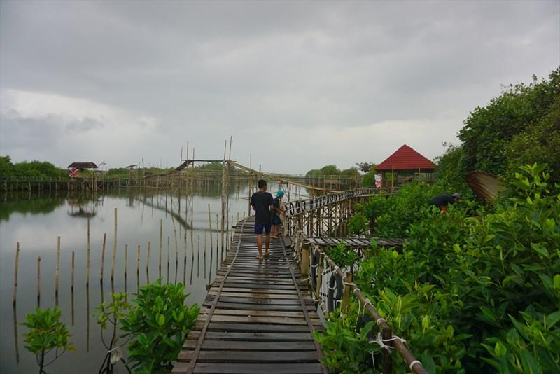 wisata hutan mangrove pantai jembatan api api kulonprogo yogyakarta (28)