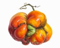 Monster-tomato