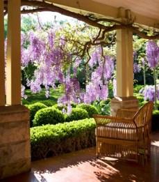 http://homes.ninemsn.com.au/houseandgarden/gardens/187718/wisteria-lane-sydney-wisteria-garden.slideshow