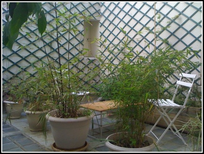 Balkon Sichtschutz Bambus Amazon