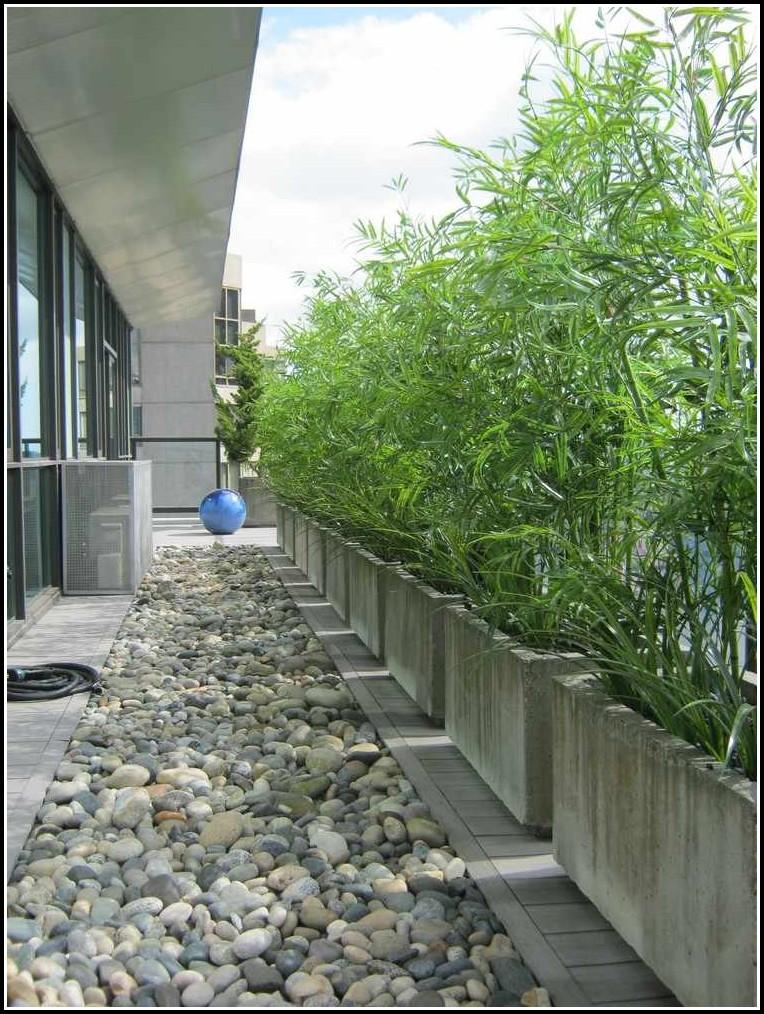 Balkon Sichtschutz Pflanzen Winterfest