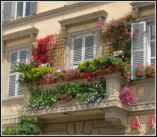 Balkon Und Terrassenpflanzen