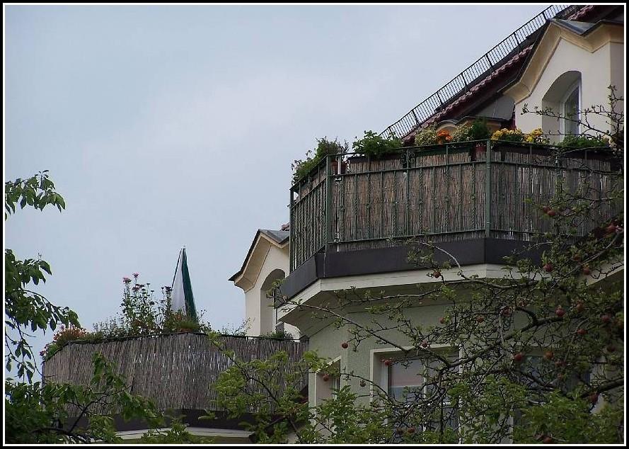 Bambus Auf Balkon Pflege