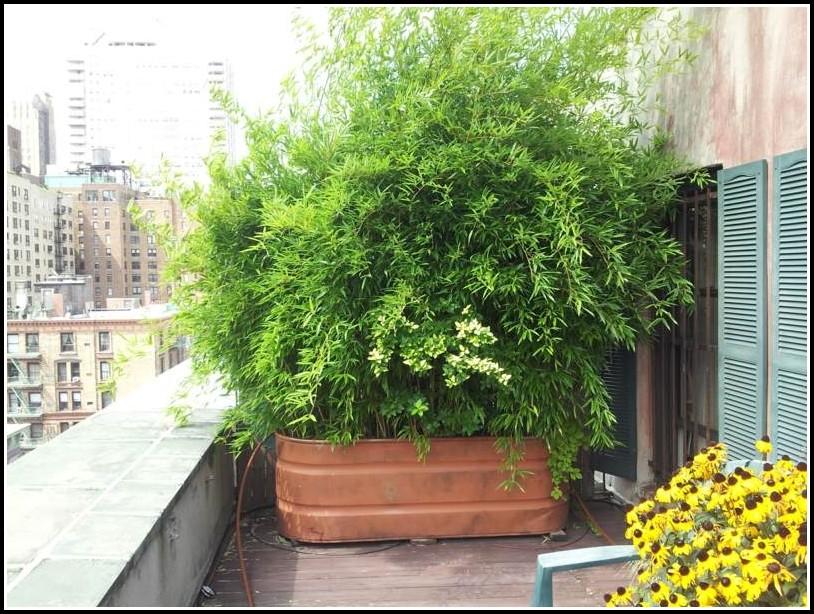 Bambus Sichtschutz Balkon Obi