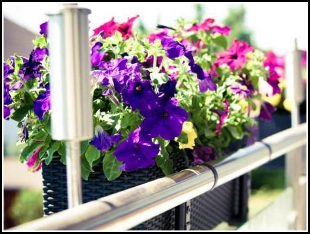 Bienen Auf Dem Balkon Was Tun