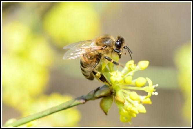 Bienen Halten Garten