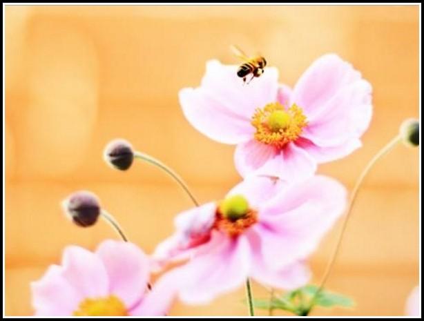 Bienen Im Eigenen Garten Halten