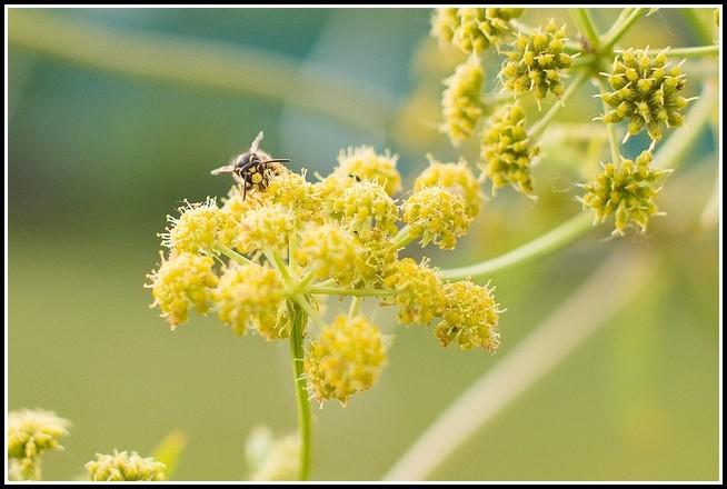 Bienen Im Garten Entfernen