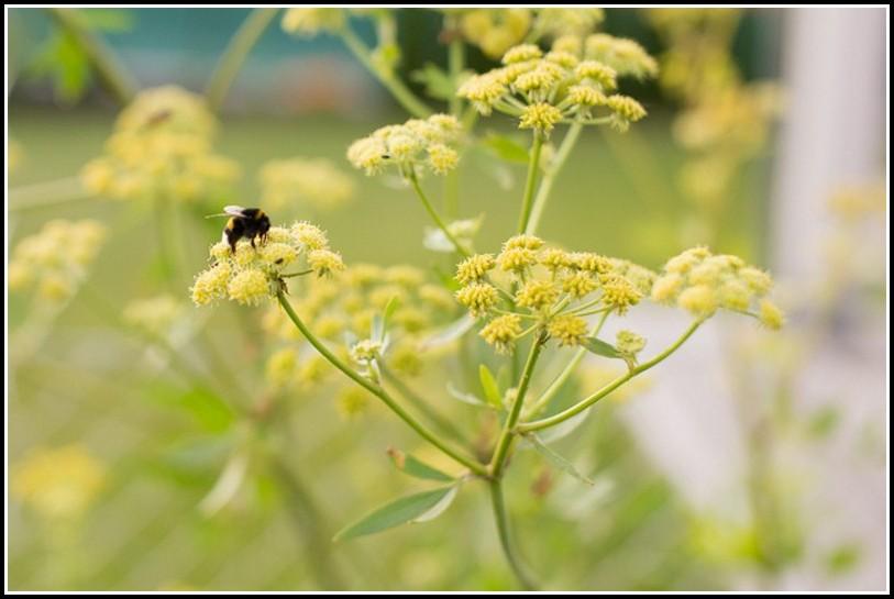Bienen Im Garten Loswerden