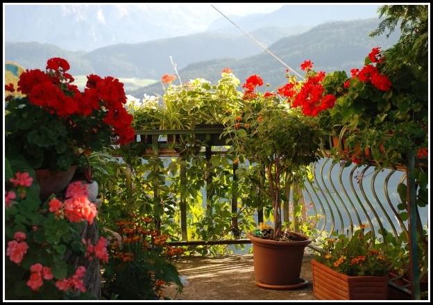 Blumen Für Den Balkon Mit Viel Sonne