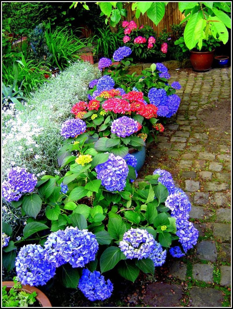 Blumen Im Garten Bestimmen