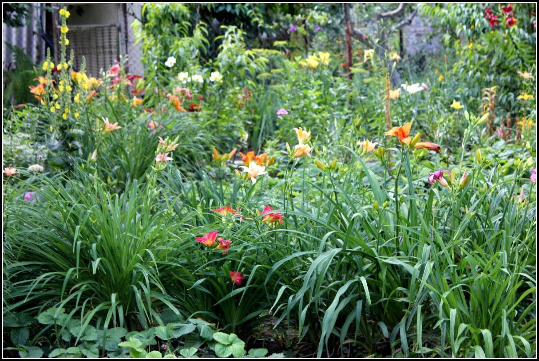 Blumen Im Garten Lied