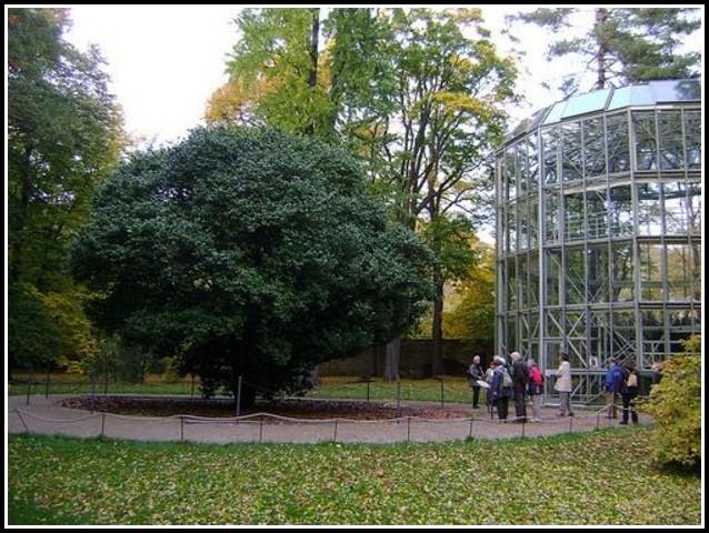 Botanischer Garten Dresden Königin Der Nacht