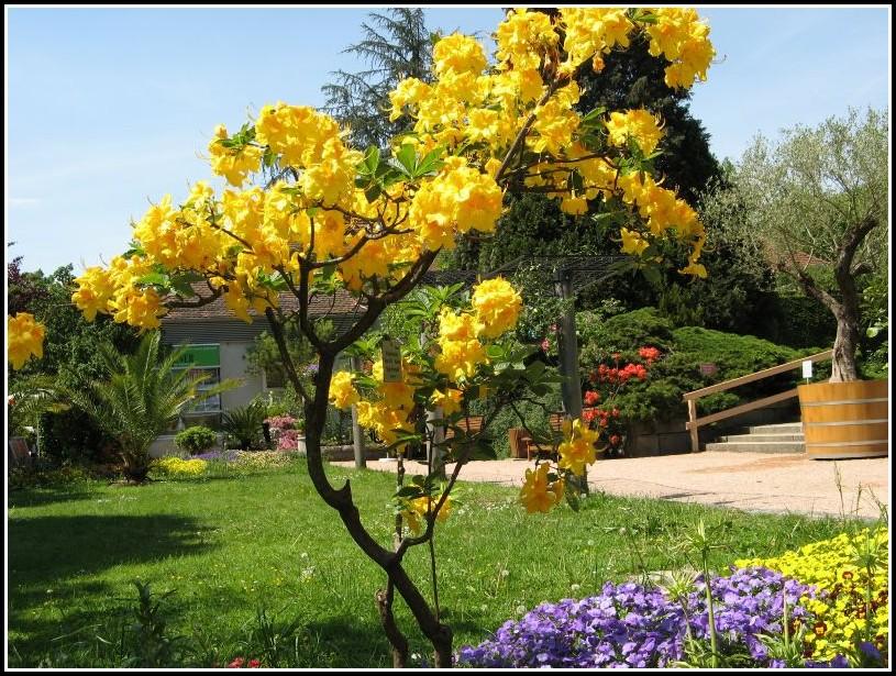 Botanischer Garten Linz öffnungszeiten