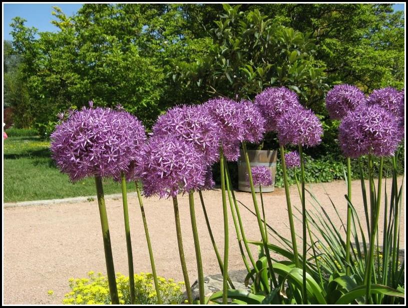 Botanischer Garten Linz Hochzeit