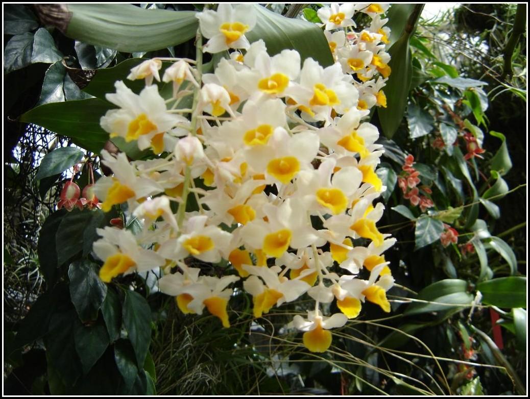 Botanischer Garten Linz Schmetterlinge