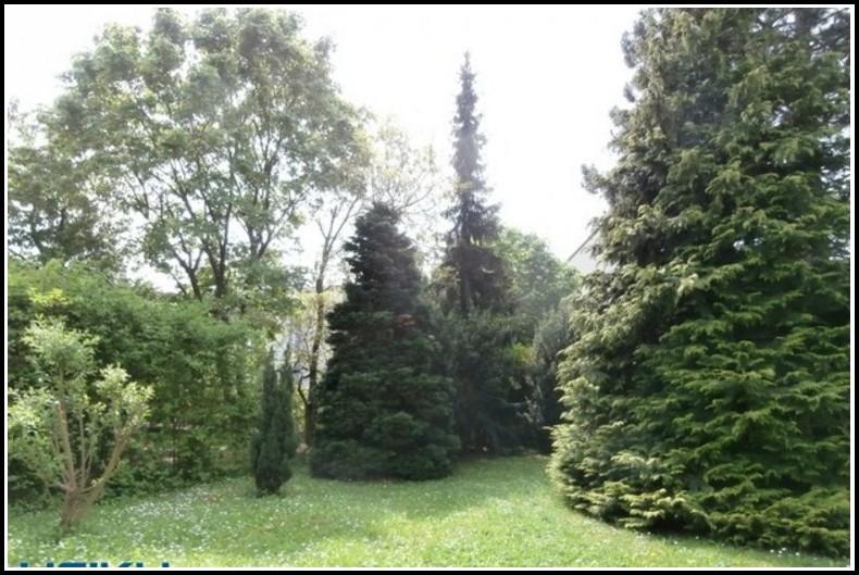 Einfamilienhaus Mit Garten Zeitz