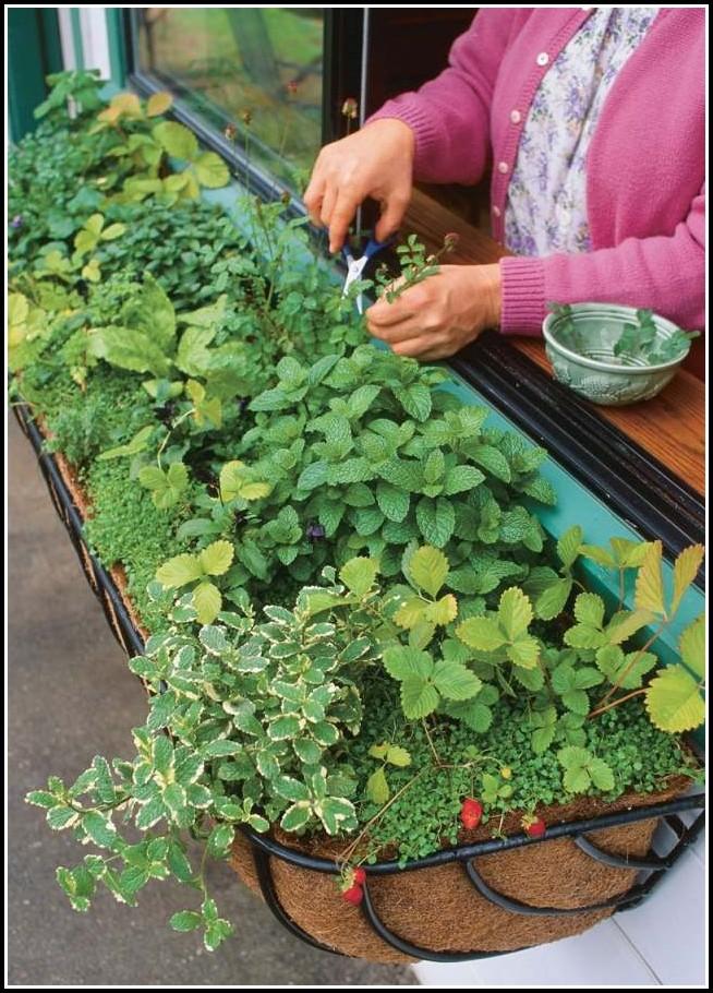 Erdbeeren Pflanzen Balkon Abstand