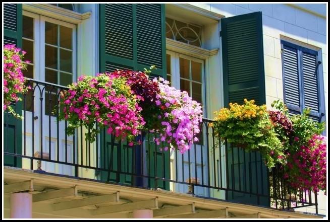 Erdbeeren Selber Pflanzen Balkon