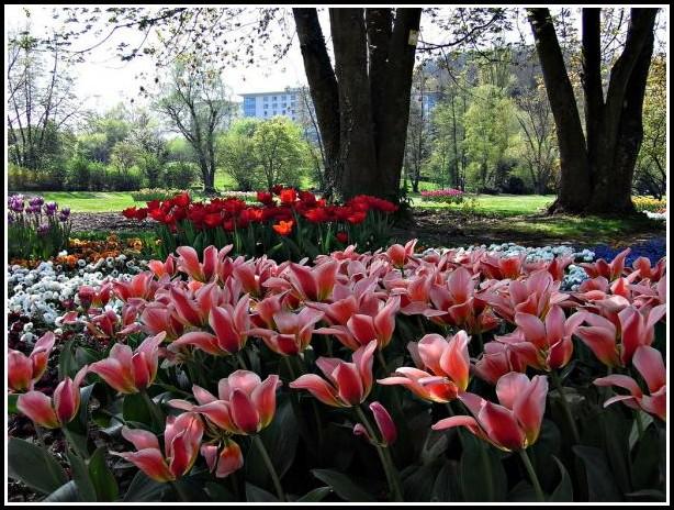 Gärtner Garten Und Landschaftsbau Verdienst