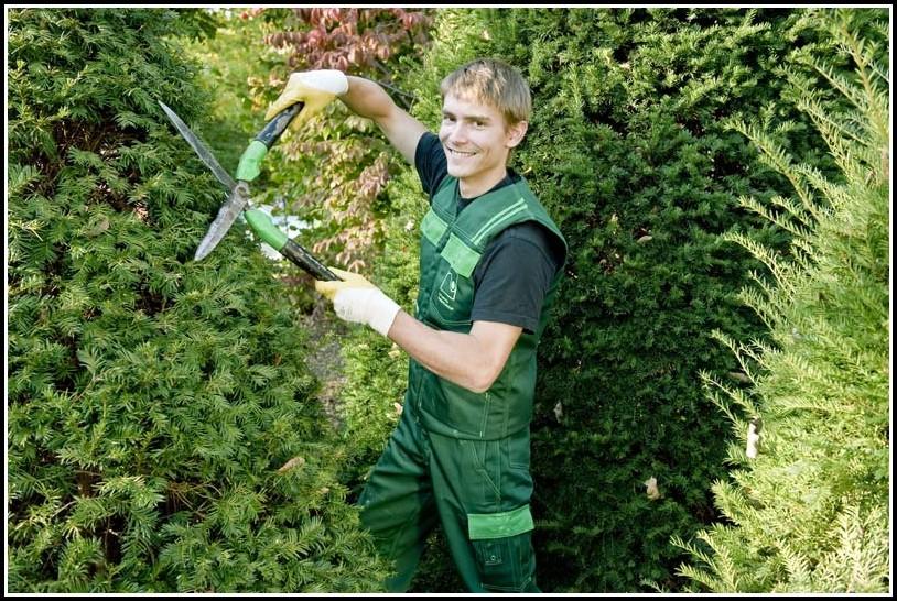 Garten Und Landschaftsbau Ausbildung Bewerbung