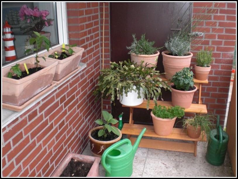 Gemüse Pflanzen Auf Dem Balkon