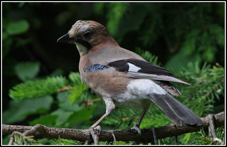 Heimische Vogelarten Im Garten