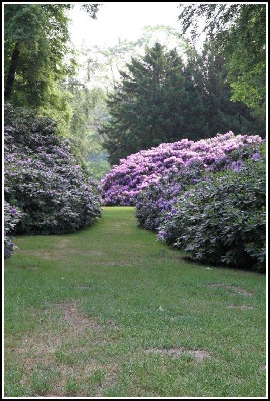 Hortensien Im Garten Blühen Nicht