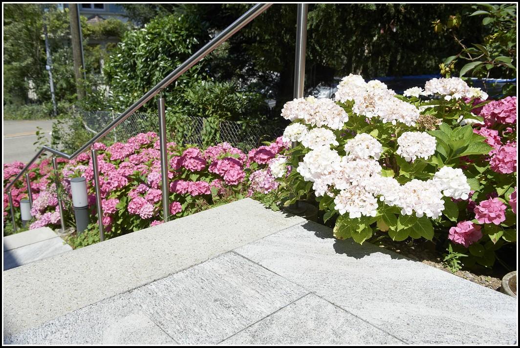 Hortensien Im Garten Pflegen
