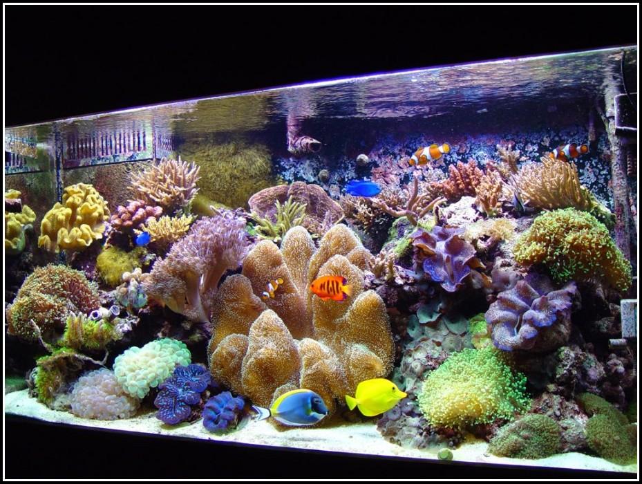 Juwel Aquarium Beleuchtung Ersatzteile