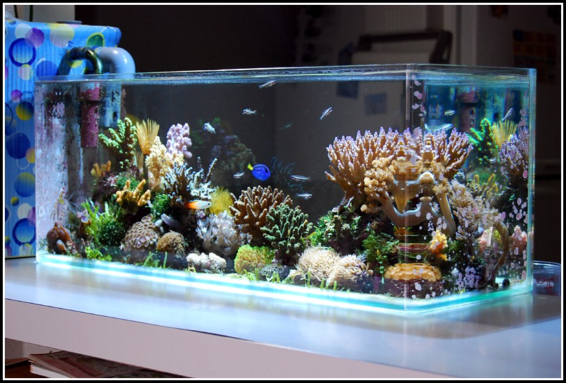 Juwel Aquarium Beleuchtung Starter Wechseln