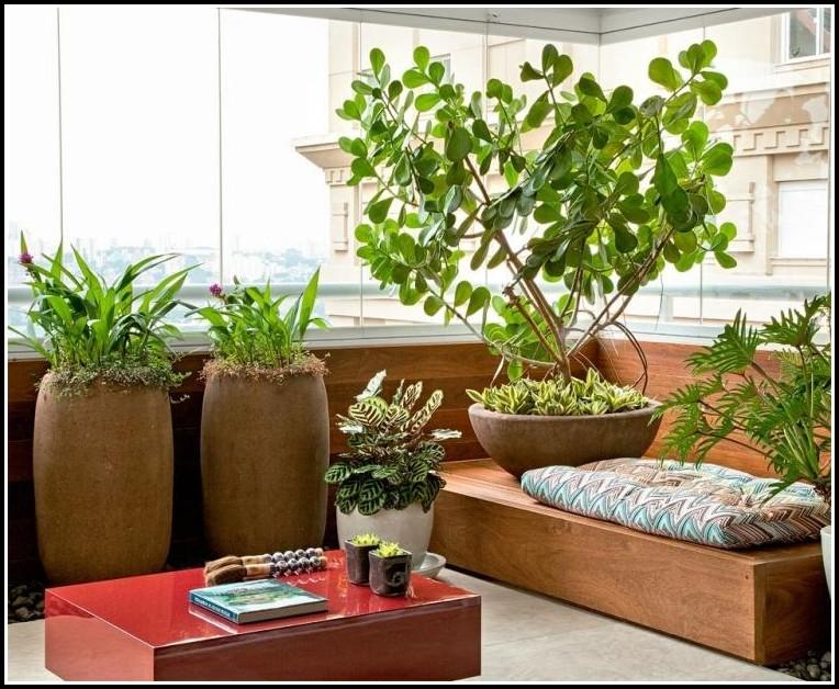 Kräuter Pflanzen Auf Dem Balkon