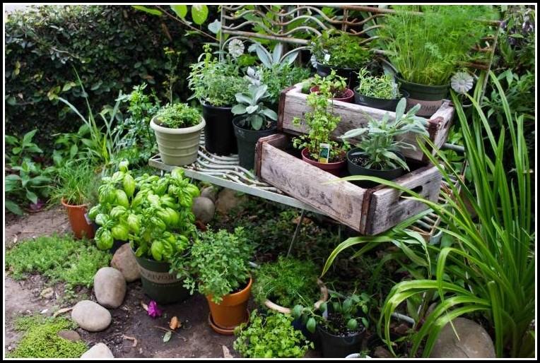 Kräuter Pflanzen Ohne Balkon