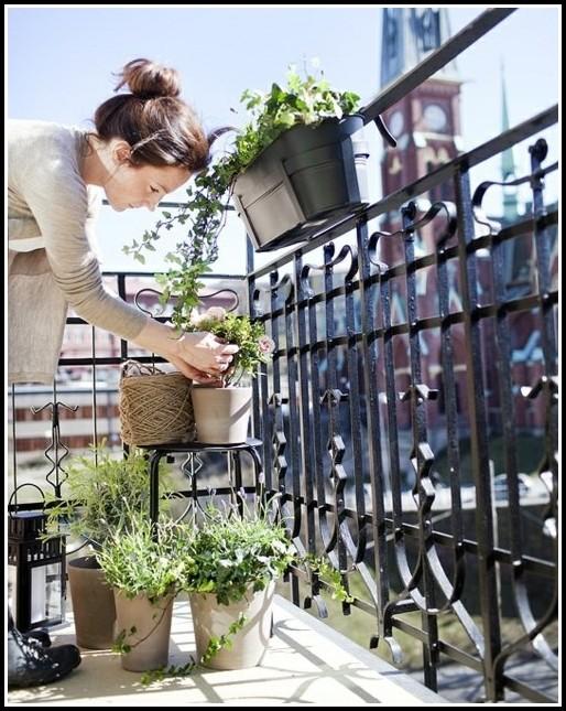 Kräuter Richtig Pflanzen Balkon
