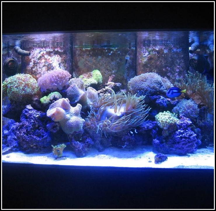 Led Streifen Aquarium Beleuchtung