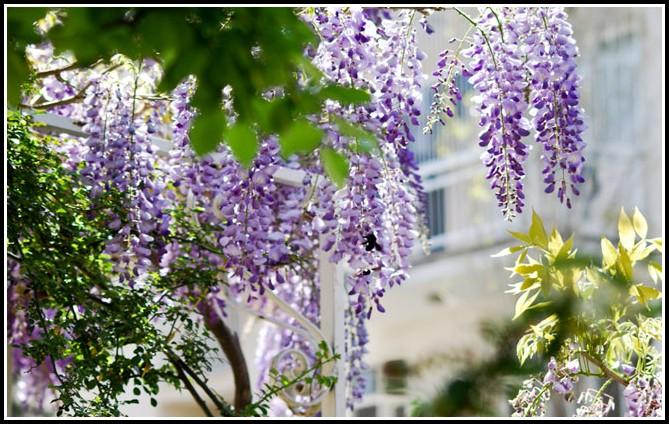 Mediterrane Pflanzen Für Balkonkästen