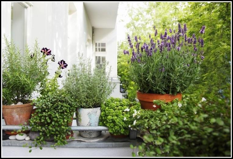 Mediterrane Pflanzen Für Den Balkonkasten