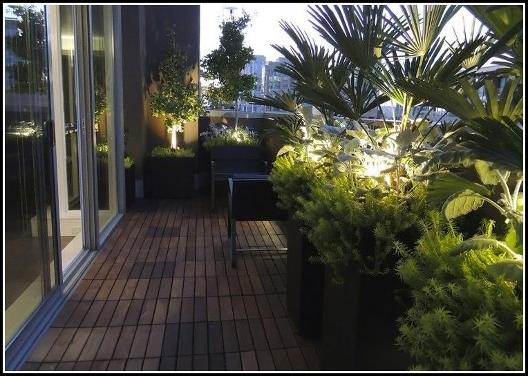 Palme Für Den Balkon