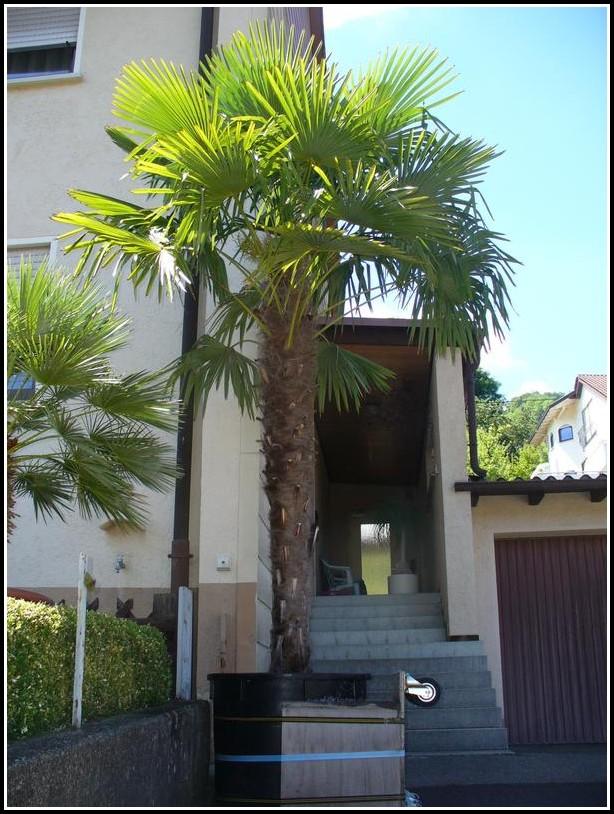 Palmen Für Den Balkon