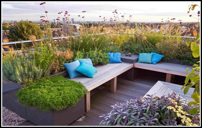 Pflanzen Als Sichtschutz Fr Terrasse